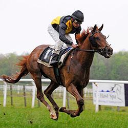 Each Way Tips - Horse Race