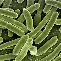 Gutamin 7 - Bacteria